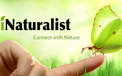 Dashboard week day 4- iNaturalist